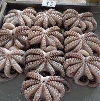 Flower Octopus