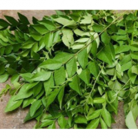 Curry Leaves (Fresh & Dehydrated)