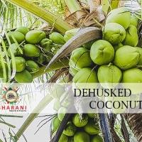 De- Husked Coconut
