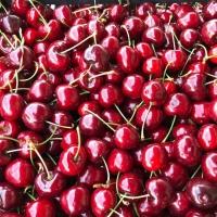 Fresh Cherries Greek Cherries