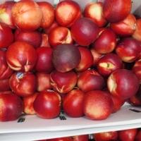 Fresh Peaches,  Nectarines & Plums