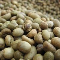 Coffee Beans Culi