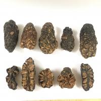 Dried Noni