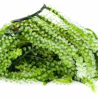 Cheap Price/ High Quality Sea Grape - Vicky