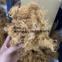 Sea Moss/ Irish Moss