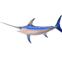 Frozen Fish - Sword Fish