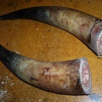 Raw Cow Horn