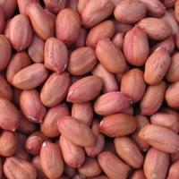 Raw Peanut Kernels