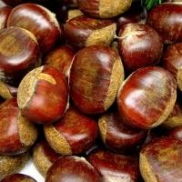 Dried Chestnut