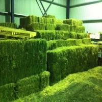 Alfalfa/lucerne Hay