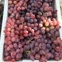 Crimson Seedless Grape