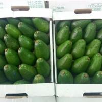 Fresh Avocado For Sale