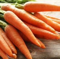 Fresh Carrot Indonesia Origin