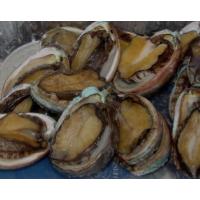 Frozen Abalone Wholeround
