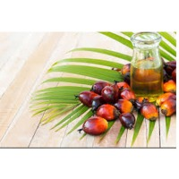 RBD Palm Fruit And Oil