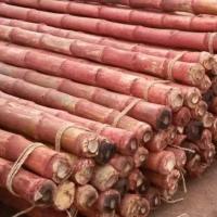 Bamboo, Bamboo Pole, Bamboo Poles