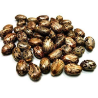 Castor Oil Seeds For Sale High Quality
