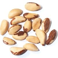 High Quality Brazil Nuts