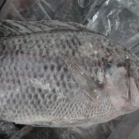 Frozen Black Tilapia Fish