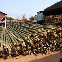 Vietnam Bamboo Pole