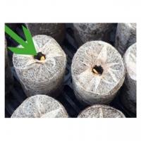 Coir Pellet Gardening