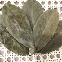 Soursop Leaves - Brazilian Paw