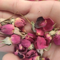 Rose Buds Red Dry