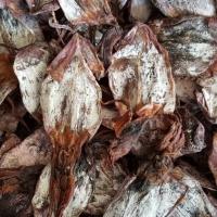 Dried Black Squid