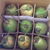 Premium Fresh Coconut