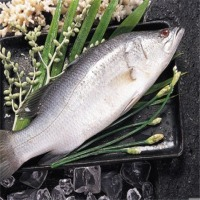 Barramundi or Seabass Fish