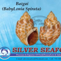 Top Shell, Babylonia Spirata And Baigai Seafood