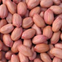 Ground Nuts Or Peanut Kernels