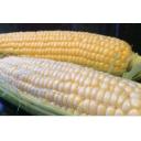 Yellow / White Corn