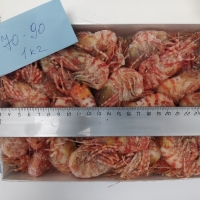Shrimp - Greenland
