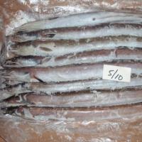 Frozen Fresh Eel Fish