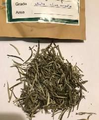 White Tea - Silver Needles