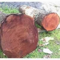 Mahogany Wood Logs In Cameroon