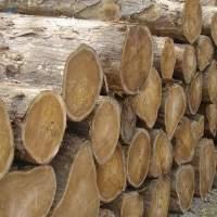 Tropical Round TEAK Wood Logs