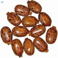 Buy Top Quality Speckled Castor Seeds